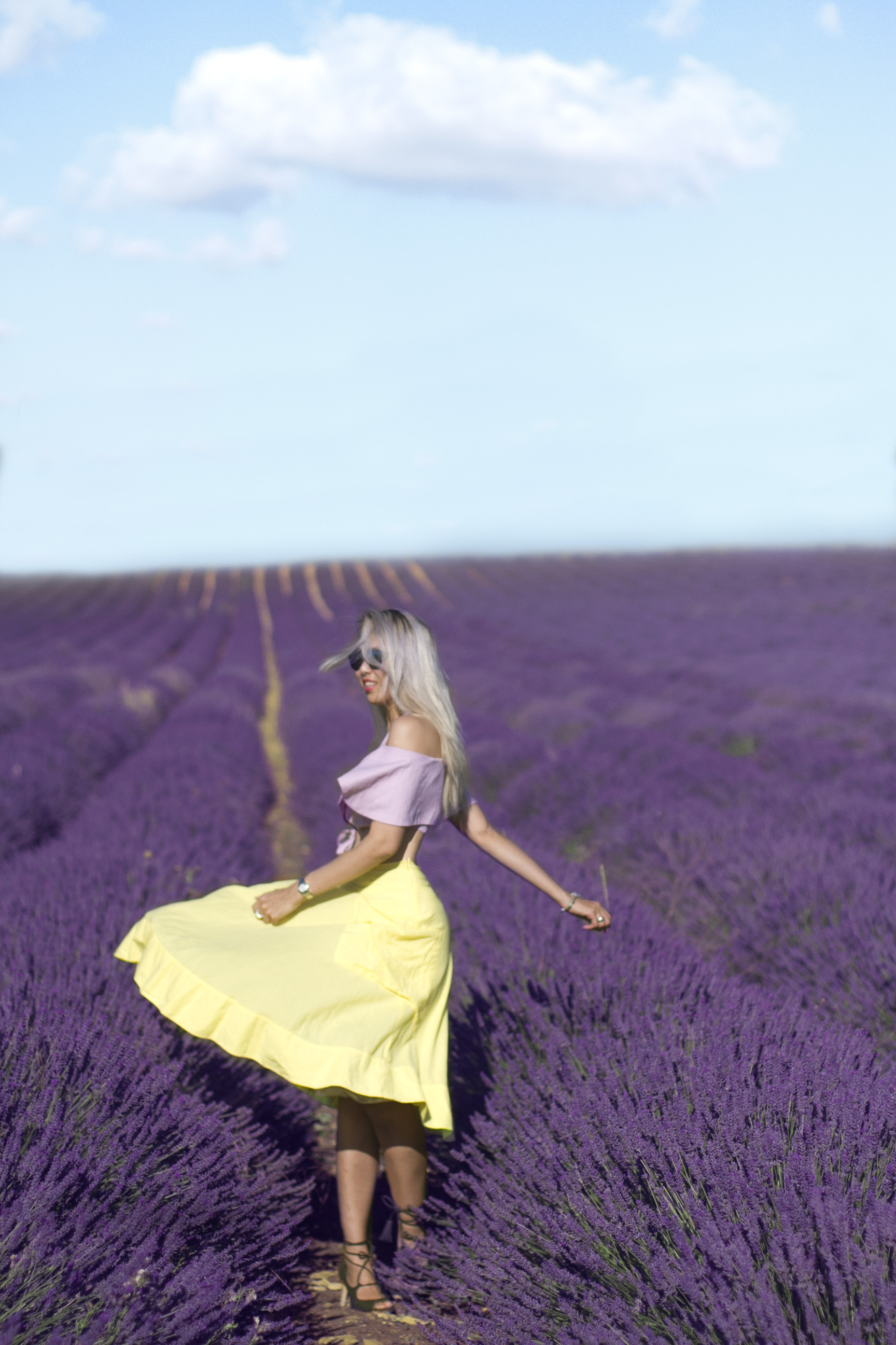 Lavenders in Provence